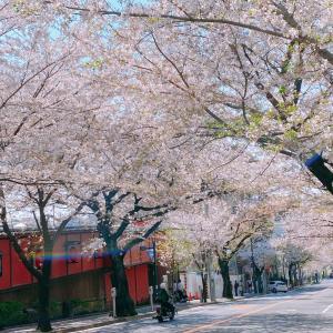桜が散っても次の主役が待っています