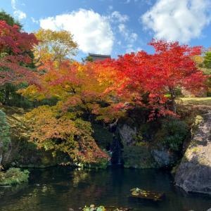 箱根美術館の紅葉を満喫