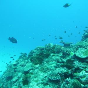 水面は荒れ気味でしたが・・・・ ~糸満近海ガイド付きボートダイビング(ファンダイビング)~