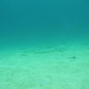 行く場所は限られましたが・・・・ ~糸満近海ガイド付きボートダイビング(ファンダイビング)~