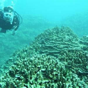 豊富なサンゴと群れ群れ ~糸満近海ガイド付きボートダイビング(ファンダイビング)~