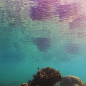 穏やかな水面
