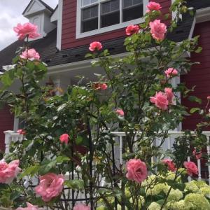 輸入住宅には薔薇が似合う2021♪