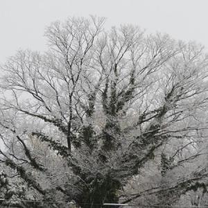 ついに雪が降ってきた。ちょっと嬉しい。