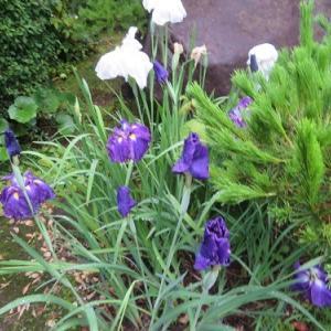 飾る花を買わなくていいのは助かる。今日はこれから仕事。