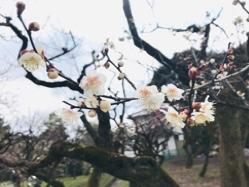 梅を見に北野天満宮と吉祥院天満宮へ!(>u
