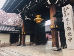 佛光寺の桜(>u