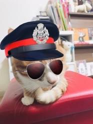 Snowの猫フィルターで遊んでみました(>u