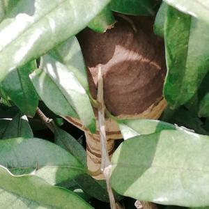 庭にスズメバチの巣‼意外な解決策!