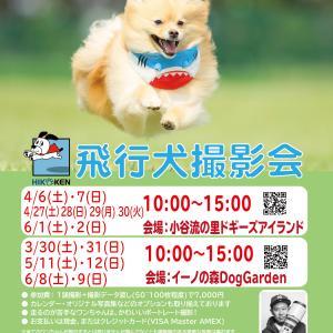 今週末は飛行犬撮影会