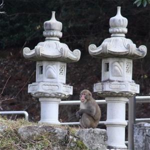 サル対策 強面(コワモテ)でいくよ