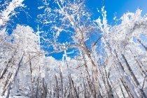 冬もまたいいもの 冬を楽しむ 「冬のうた」 キロロ