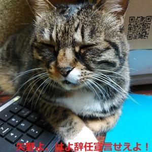 矢野よ、はよー辞任宣言せえ・・今日は苦手の上茶谷や