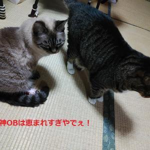 阪神OBは恵まれすぎなんやでぇ・・あーあーあ、今日は大野や(溜息)