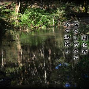 「隠れ沼」