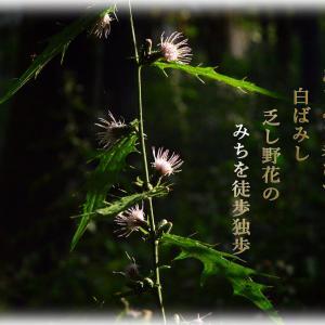 「どっぽ(独歩 )」