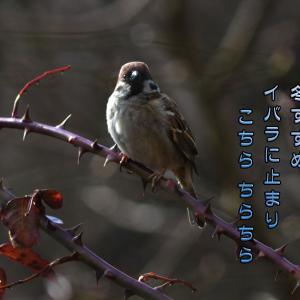 「雀観察」