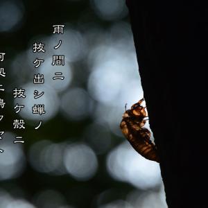 「蝉は雨が嫌い」