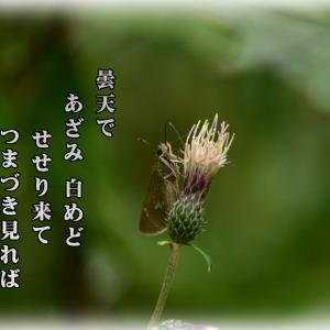 「セセリ蝶」