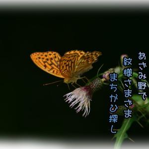 「豹紋蝶の間違い探し」