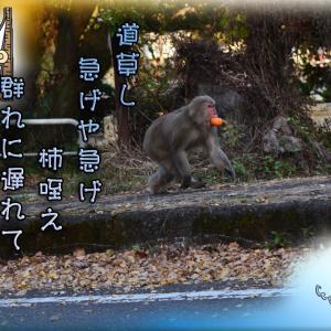 「碓氷峠のお猿さん」