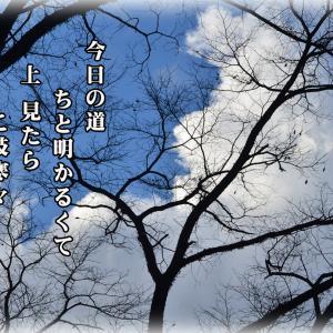 「ご近所徘徊/晩秋こぬれ」