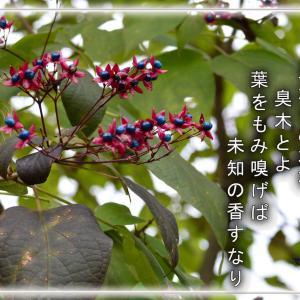 「くさぎの花(臭木 )」