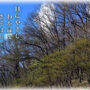 「ご近所徘徊/緑の風」