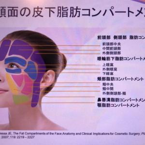 小顔秘密 顔の皮下脂肪
