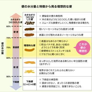 腸内環境セルフチェックの仕方