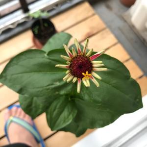 お花の中に咲くお花 フラワーインフラワー!インベランダ