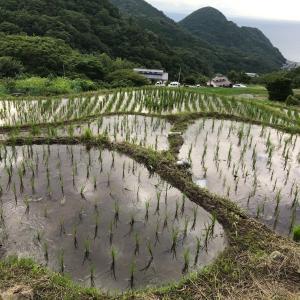 伊豆半島のウエストコースト!松崎町の棚田へ取材に行ってきました