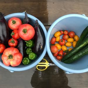 東京も暴風雨になっていましたが、昨日のうちに収穫に行ってきました。そこで野菜の重さ当てクイズです