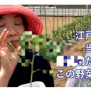 今年度も始まったよ~♪ YouTube動画アップしました! せたがや体験農園!畑の世界ふしぎ発見