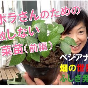都会の小さなベランダやお庭で農ライフ始めよう!ズボラさんでも失敗しにくい野菜の苗の選び方