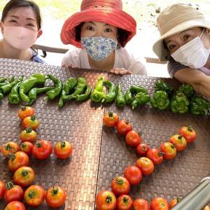 せたがや体験農園~夏野菜の収穫まっさかり!トマトを並べてベジ文字作りました~♪