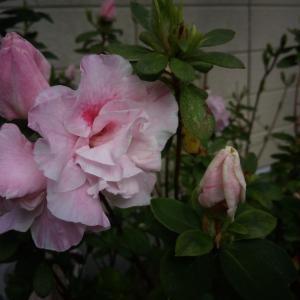 優しいと思える花を見ましょ🤗