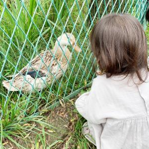 【お出かけ】動物との距離が近い娘