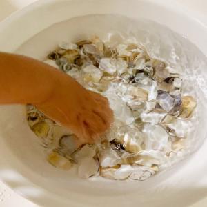 【今日の遊び】貝殻拾い