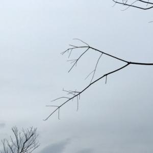 *雨 & 復活〜*