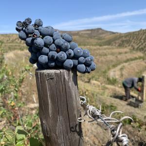 ワインの輸入販売を開始しました。