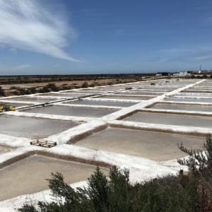 ポルトガルの塩田