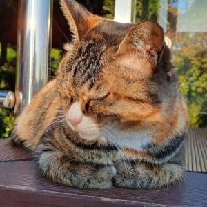 猫派にはたまらない。龍頭山公園 その1