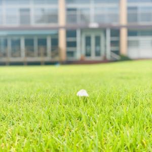 ゴルフボールが落ちている!?