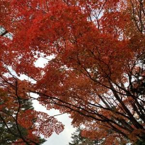 11月の旅〜①〜人生初の軽井沢へ