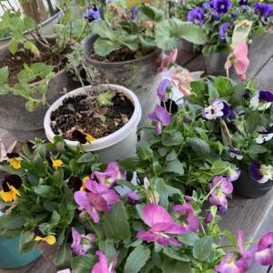 土を触ろう、花を愛でよう🌸