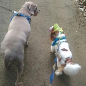 Dogs*今朝の犬たち&スマホ買い替え