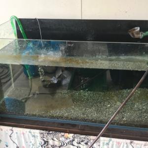 春の90cm水槽大掃除