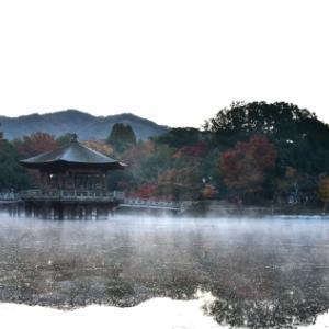 早朝の奈良公園
