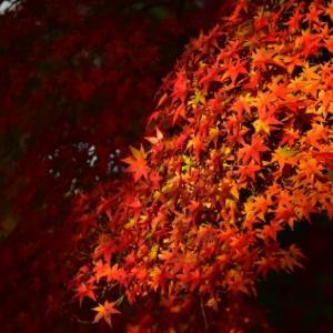 先週末の奈良公園・紅葉
